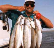 Speckled Trout Galore!