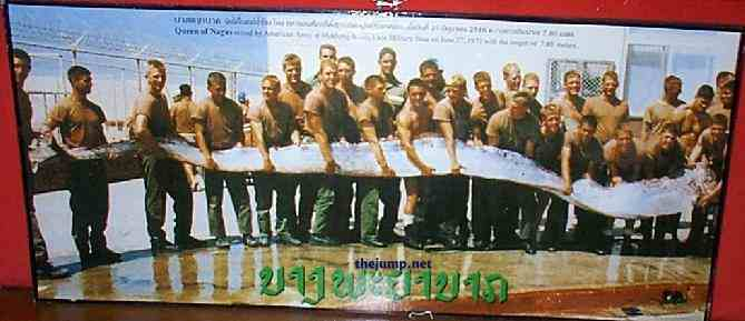 Giant Oarfish Oarfish 56 Ft