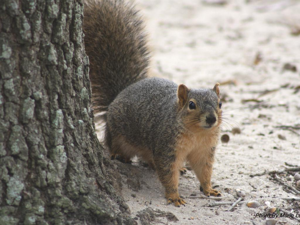 Displaying 15 gt images for squirrel targets